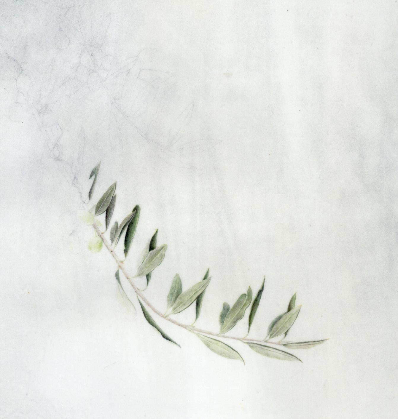 olive branch  olive branch  olive branch   work