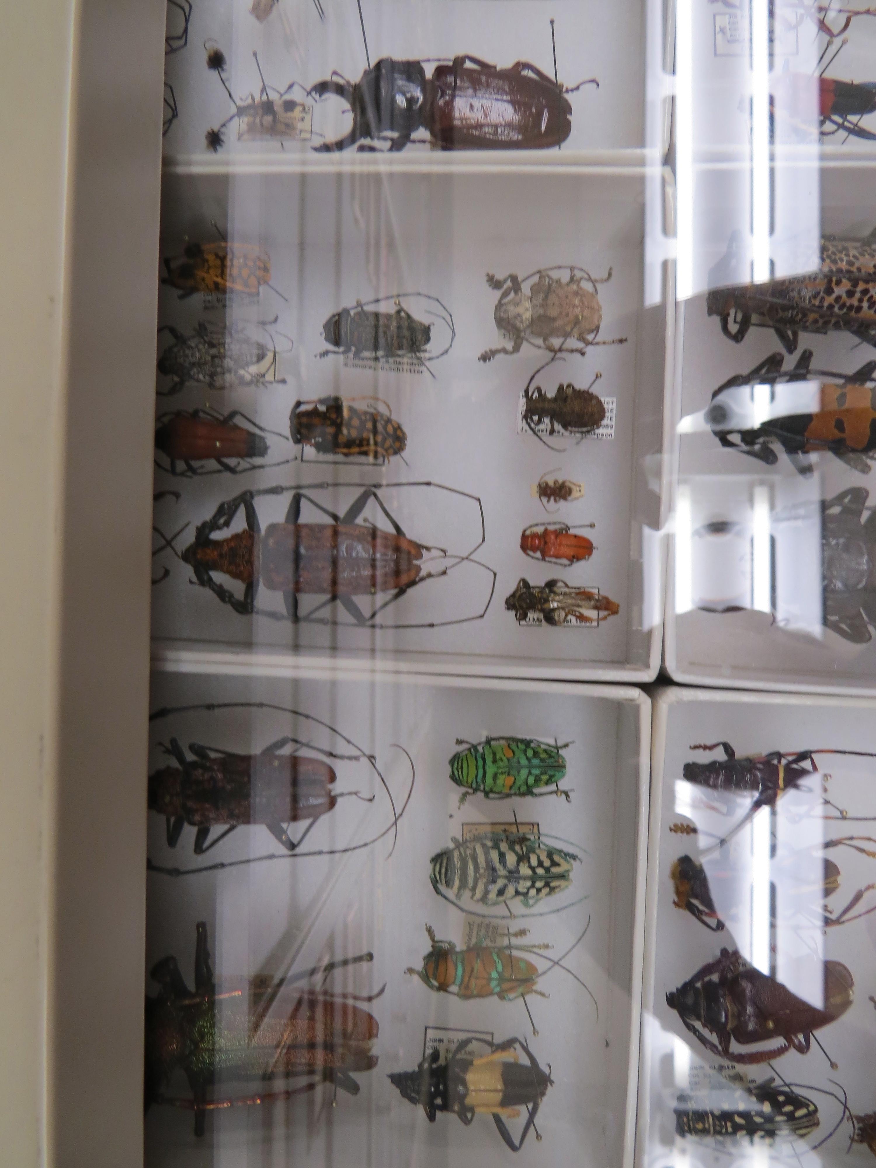 A bug drawer