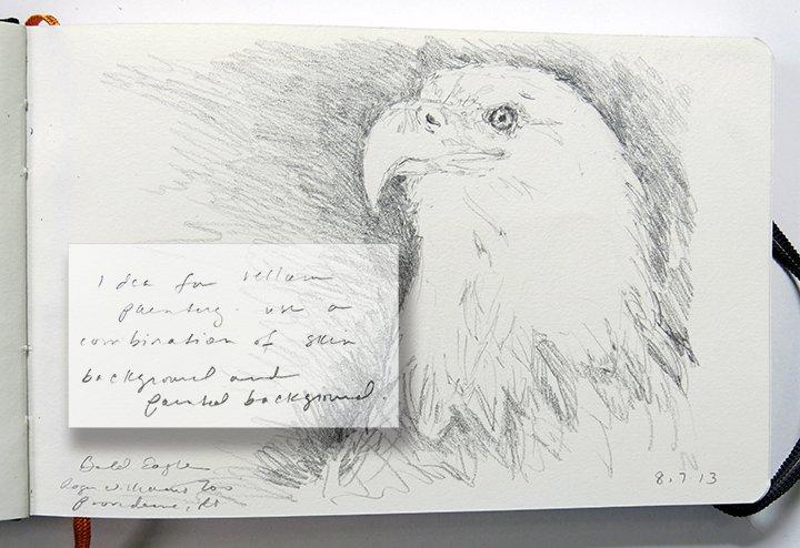 Bald Eagle - 8/7