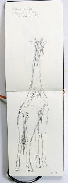 Masai Giraffe - 8/6
