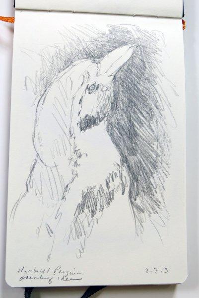 Humboldt Penguin - 8/7