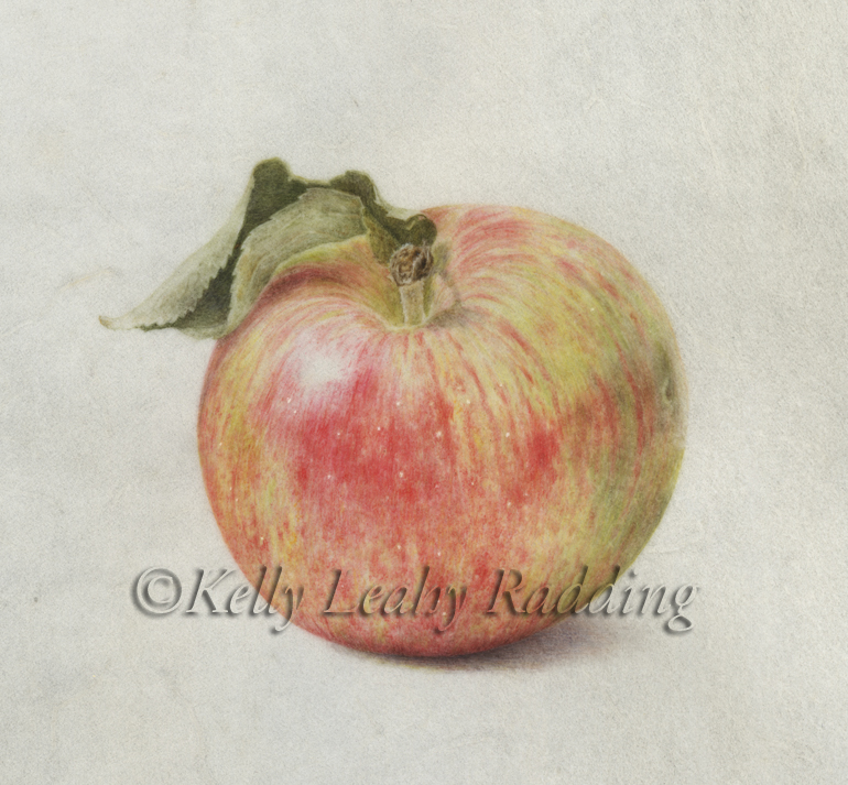 Final Italy Botanical and an Heirloom Granniwinkle Apple!