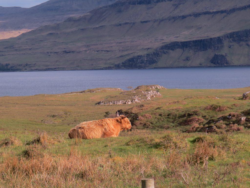 My Scotland Adventure!