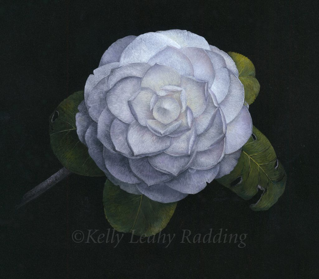 Fibonacci's Camellia