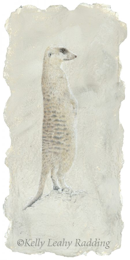 silverpoint and watercolor drawing meerkat