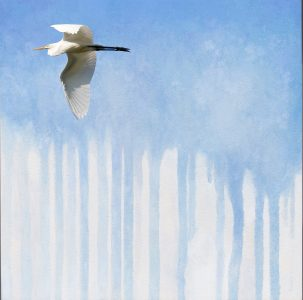 great-egret-flying-off-to-the-left-kelly-leahy-radding