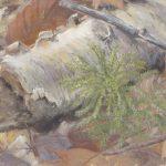princess pine, birch, casein, pastel
