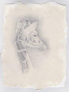A Study in Silver, giraffe, Kelly Leahy Radding