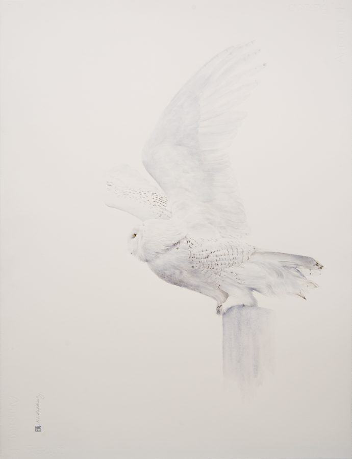 Transcendence, Snowy Owl, Kelly Leahy Radding