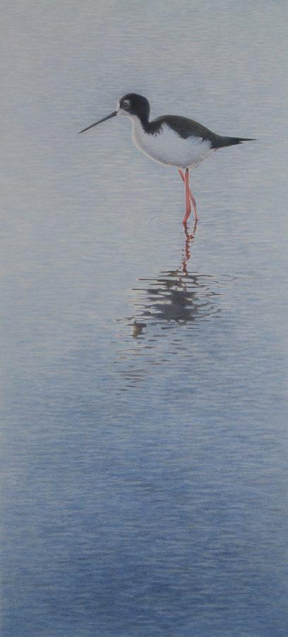 Hawaiian bird, black necked stilt, endangered species