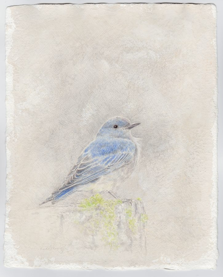 bluebird, Kelly Leahy Radding, silverpoint