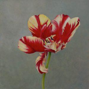 tulip, egg tempera, alkyd, oil, panel, Kelly Leahy Radding