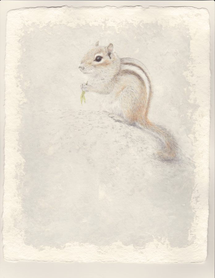 chipmunk, silverpoint, watercolor, Kelly Leahy Radding