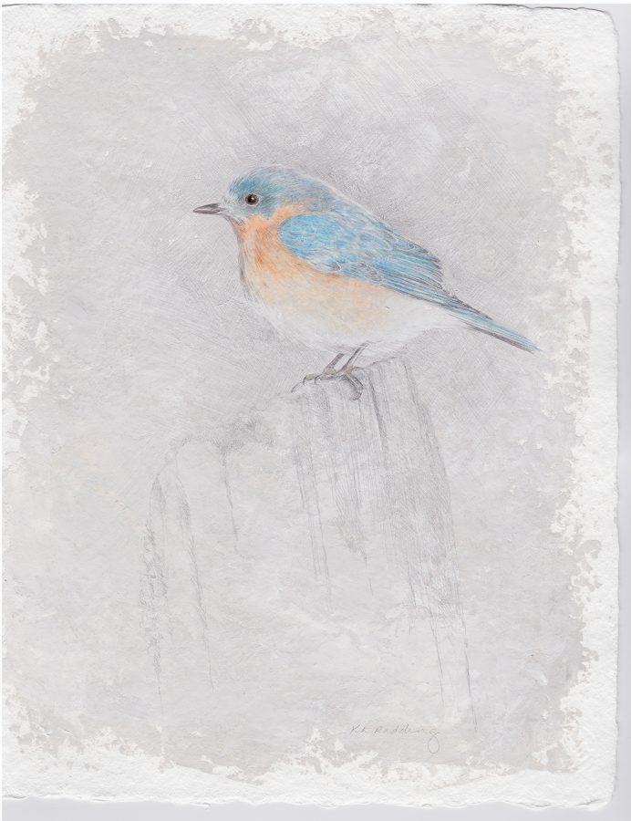 eastern bluebird, silverpoint, Kelly Leahy Radding