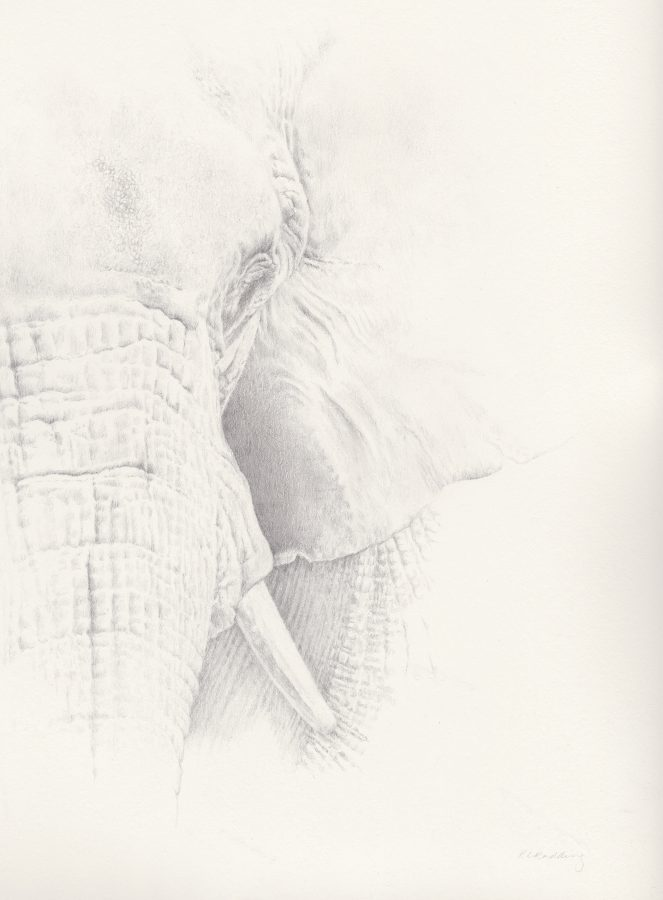 elephant, silverpoint, Kelly Leahy Radding