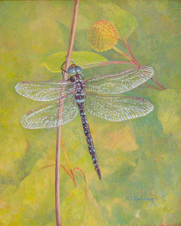 dragonfly, fall, casein, panel, Kelly Leahy Radding