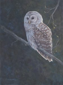 barred owl, casein, panel, Kelly Leahy Radding