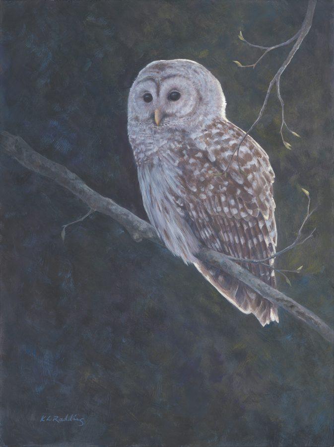 barred owl, casein, panel, Kelly Leahy Radding
